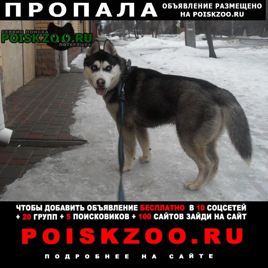 Пропала собака вознаграждение Тамбов