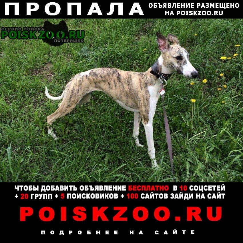 Пропала собака поселок новозавидовский Клин