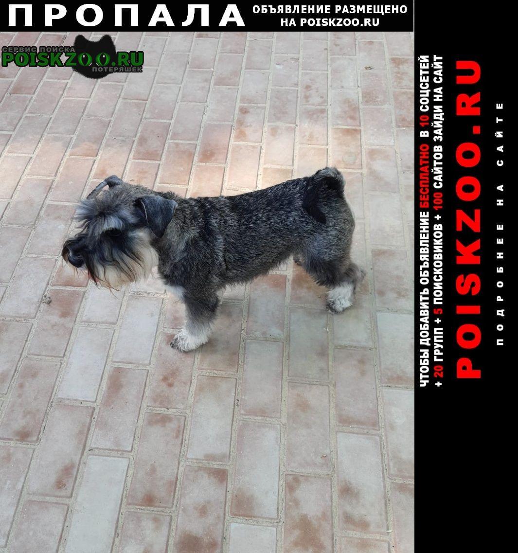 Пропала собака.. в первой половине дня Ростов-на-Дону