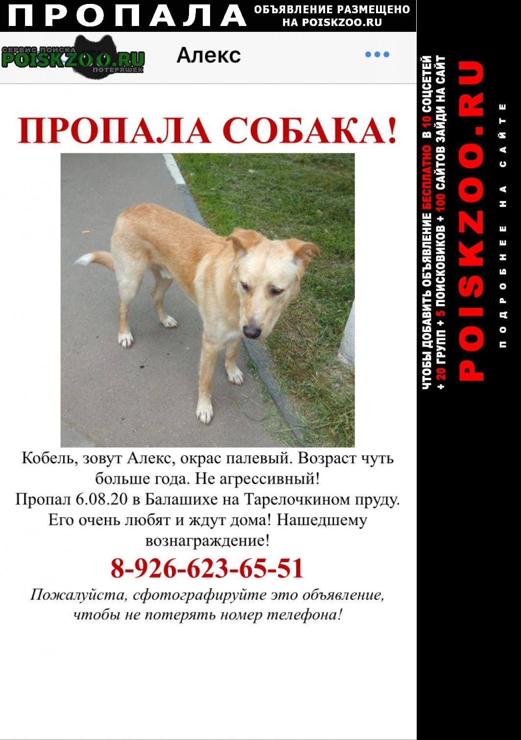 Пропала собака пожалуйста, всё ещё ищем   Балашиха