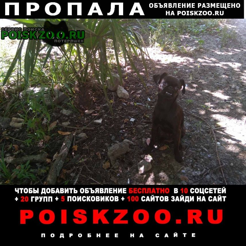 Пропала собака Борисоглебск