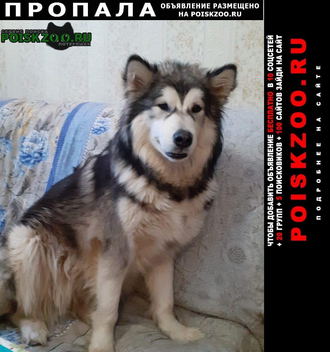 Пропала собака Люберцы