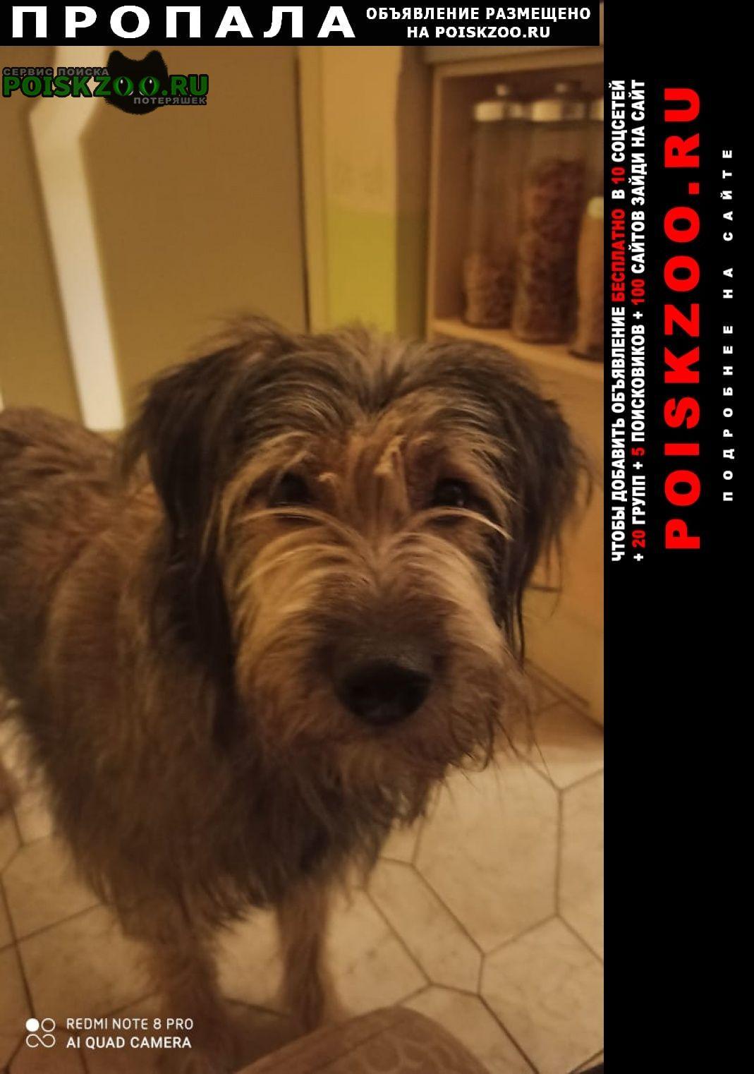 Пропала собака потерялась Москва