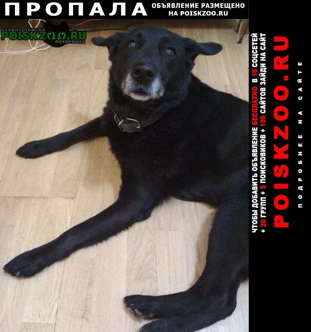 Родионово-Несветайская Пропала собака в районе хутора каменный брод
