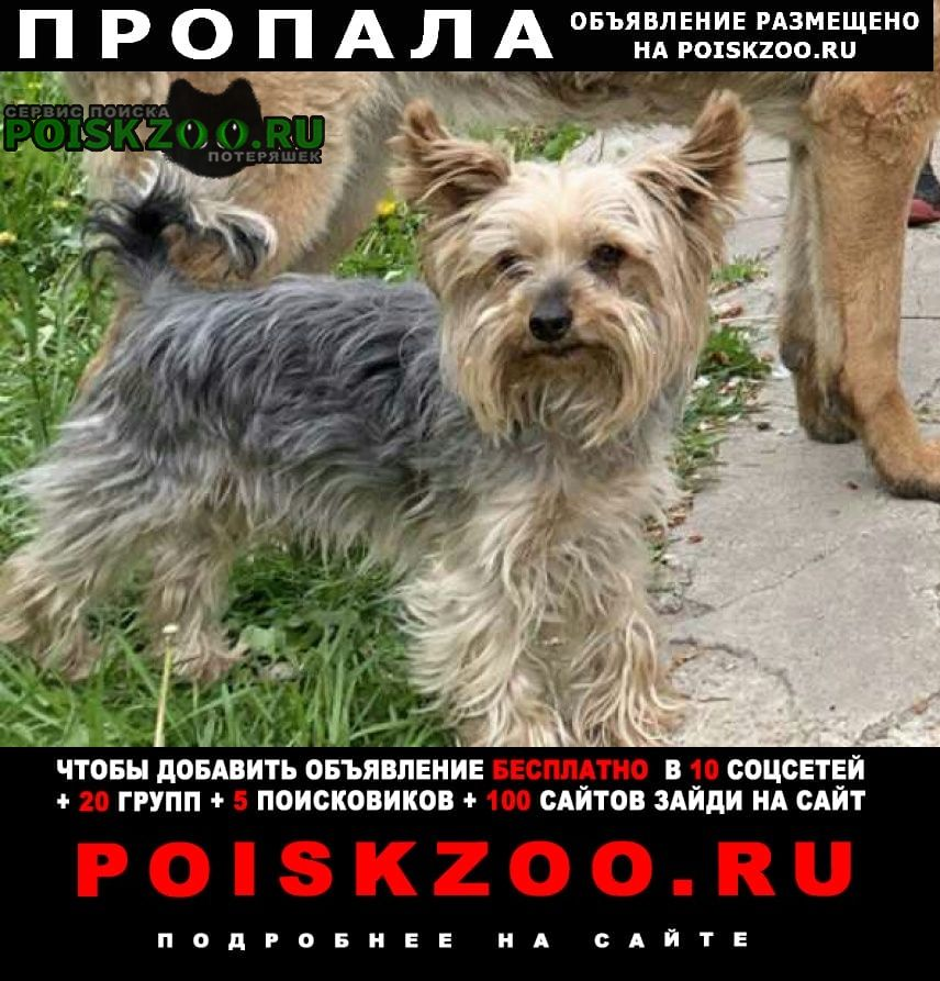 Пропала собака срочно  йоркширский терьер Минск
