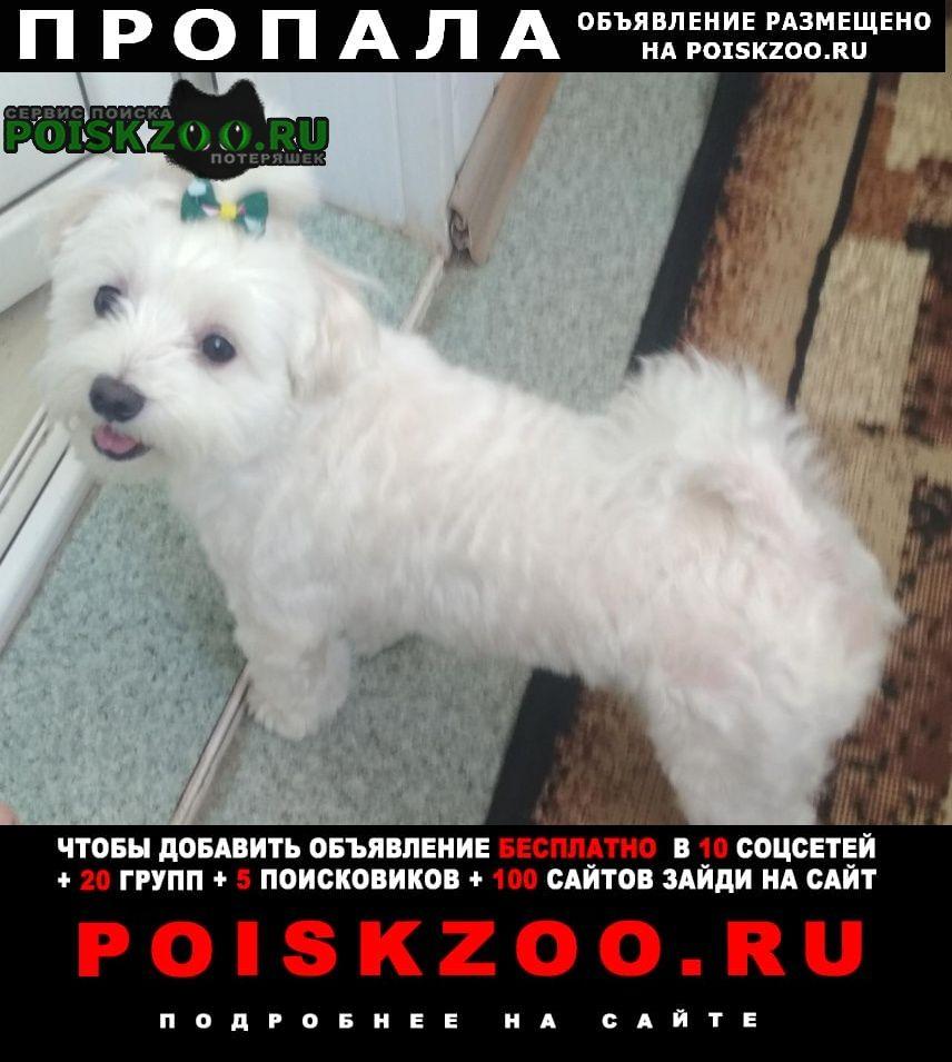 Пропала собака Волгоград