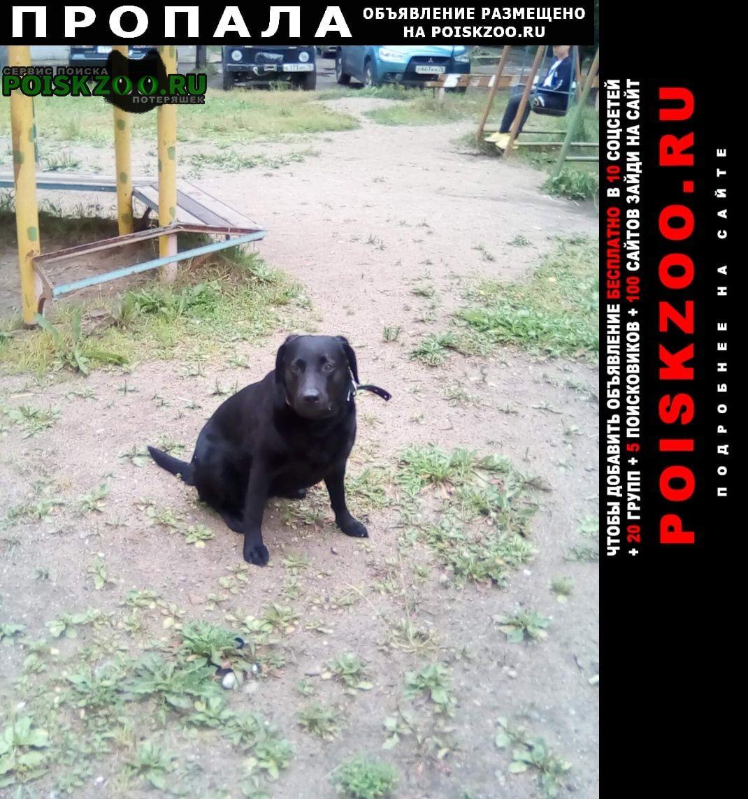 Пропала собака чёрный лабрадор Ярославль