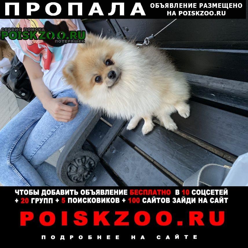 Пропала собака срочно потерялась  шпиц Москва
