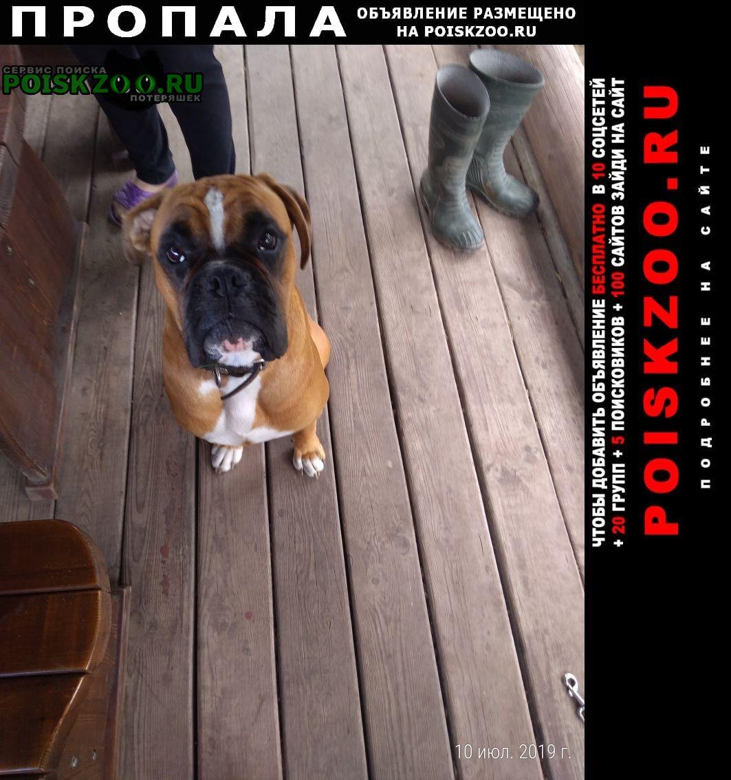Пропала собака Брянск
