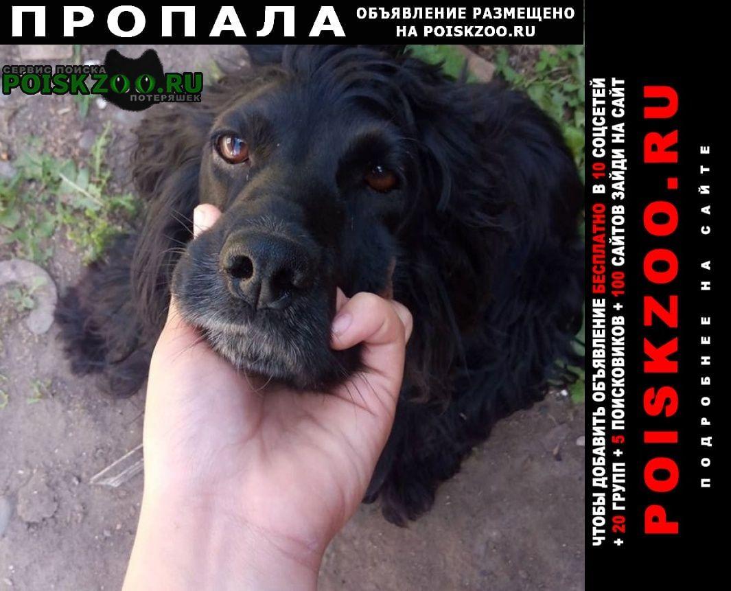 Пропала собака спаниель сука хвост купирован Минусинск