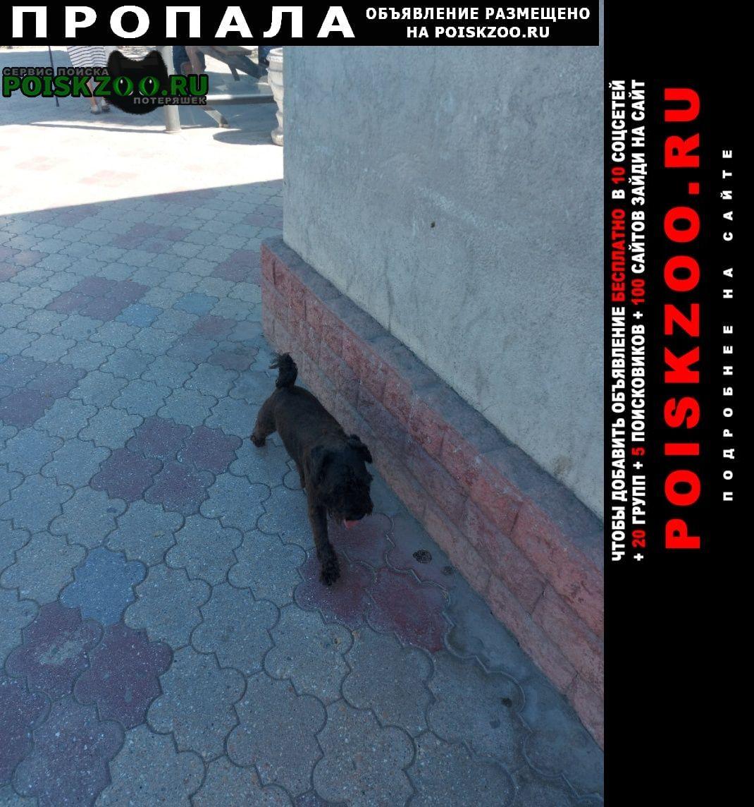 Севастополь Пропала собака цвергшнауцер. 2, 5 года кличка агат.