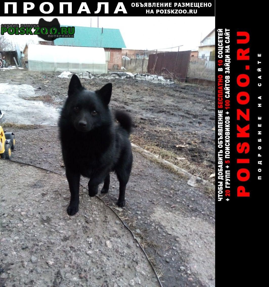 Пропала собака Ордынское