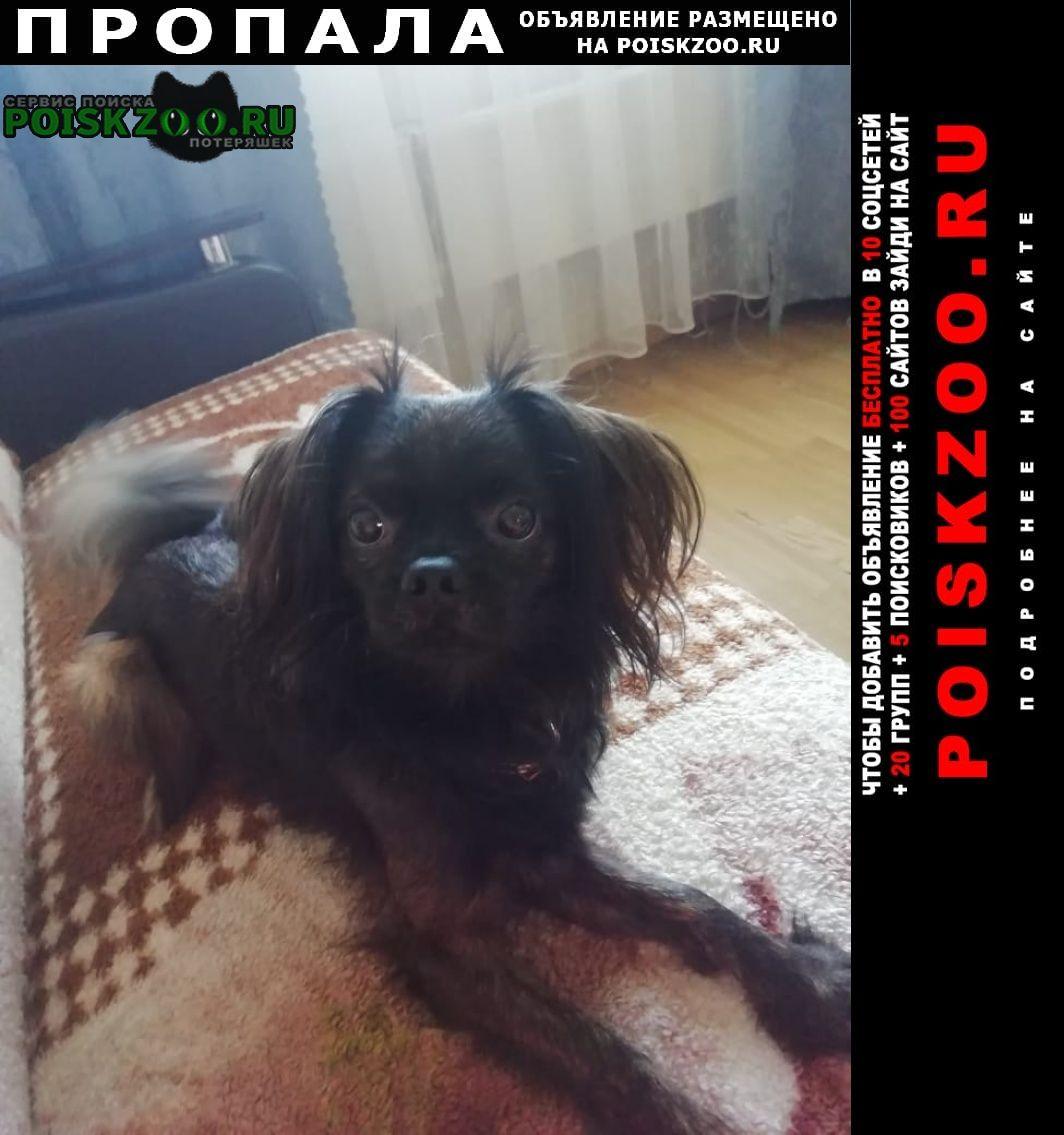 Пропала собака Барыбино