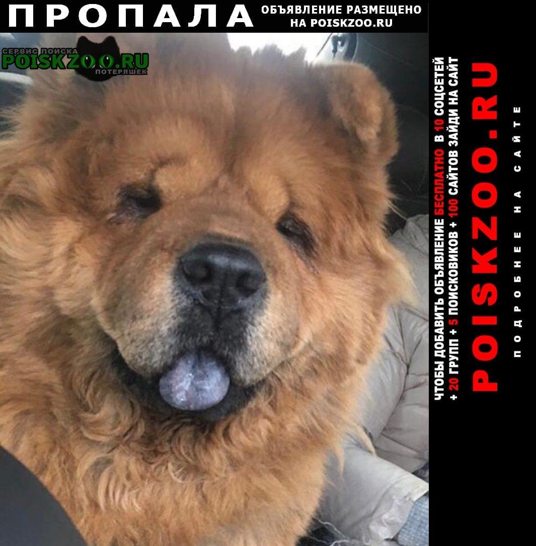 Пропала собака, чау-чау амирхана 3 Казань