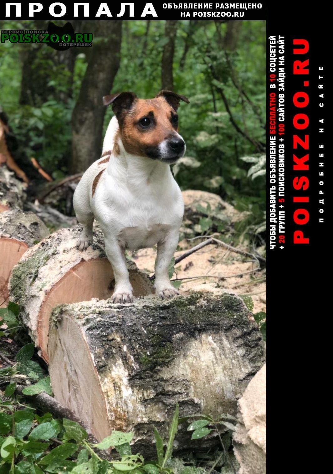 Пропала собака зовут майк, 5 лет дружелюбный, упитанн Подольск