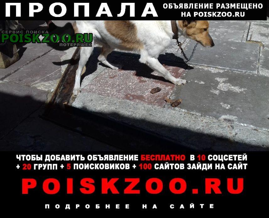 Пропала собака безпородная Новосибирск