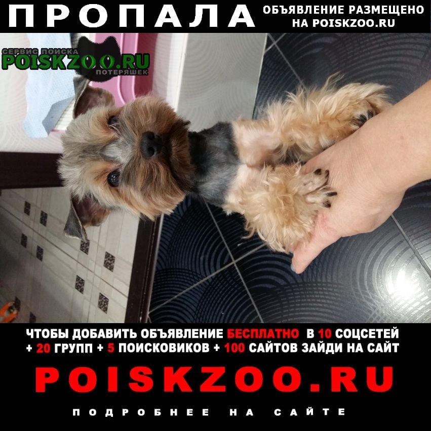 Брянск Пропала собака