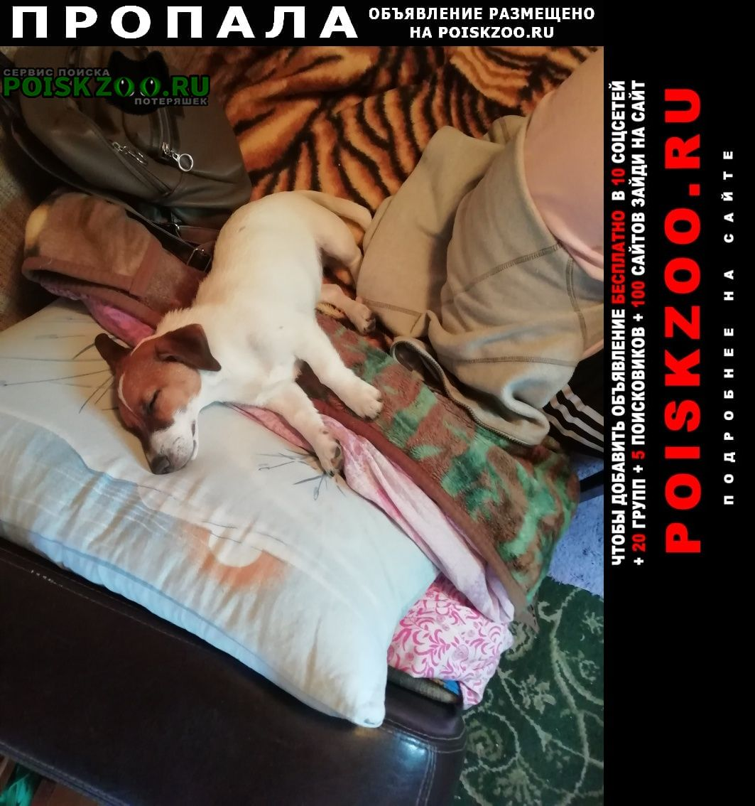 Пропала собака в садах боровик Курган