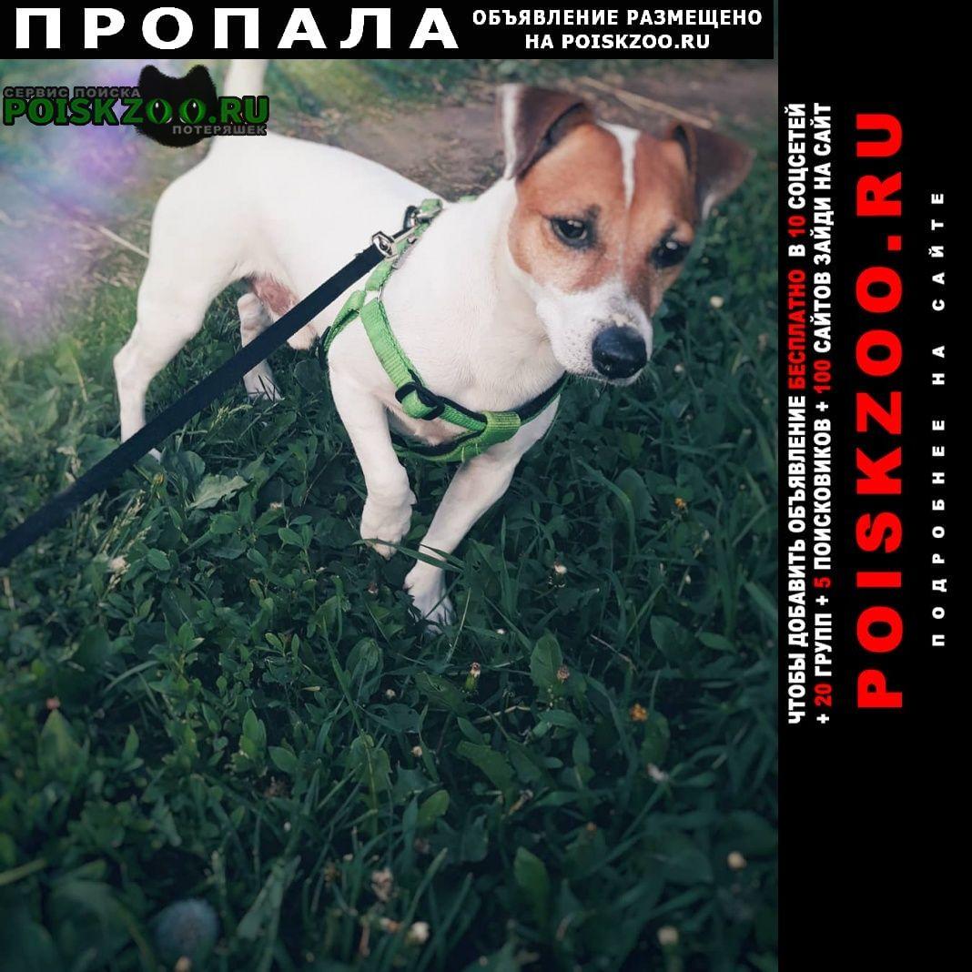 Пропала собака сегодня сбежала Москва
