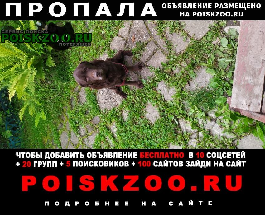 Климовск Пропала собака прошу помощи
