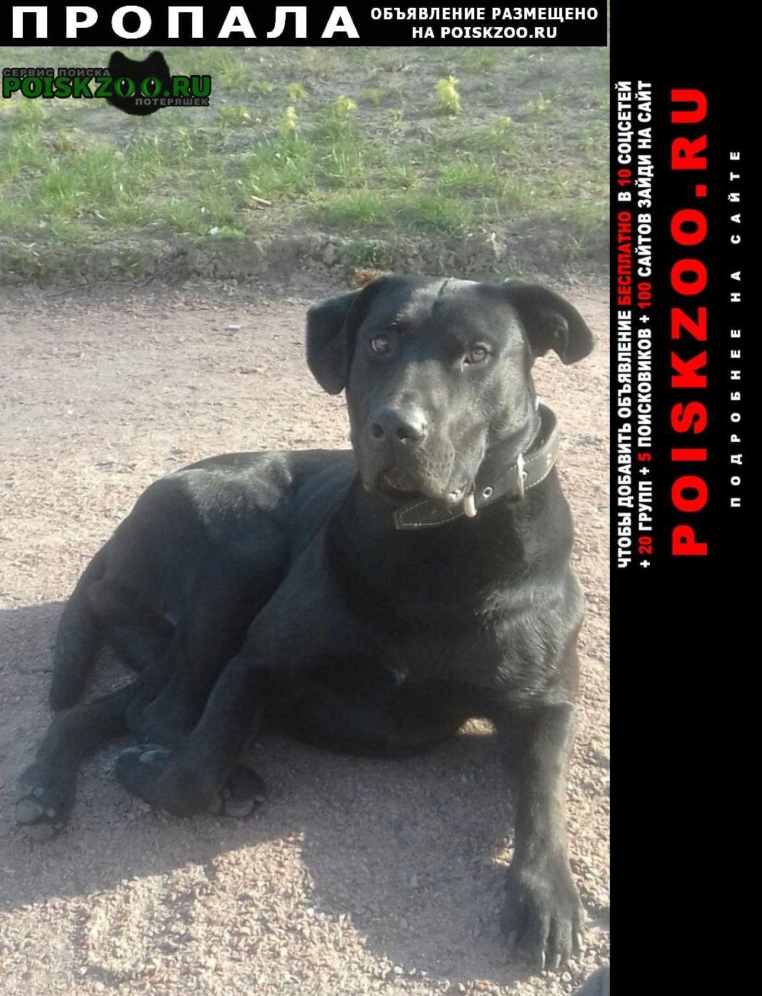 Пропала собака Петродворец