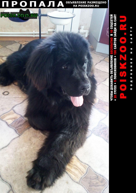 Пропала собака помогите найти и вернуть нашу любимицу  Ильинско-Подомское