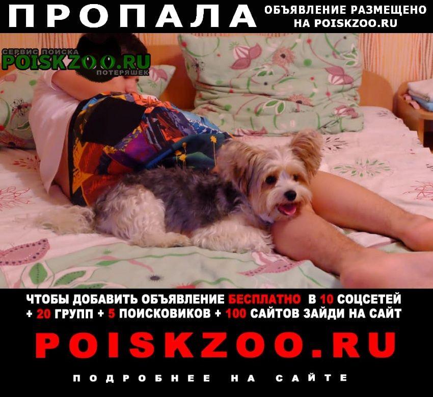 Пропала собака Алупка