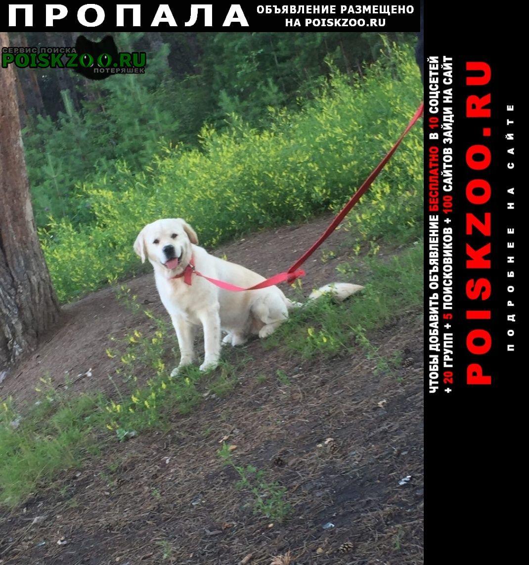 Красноярск Пропала собака золотистый ретривер
