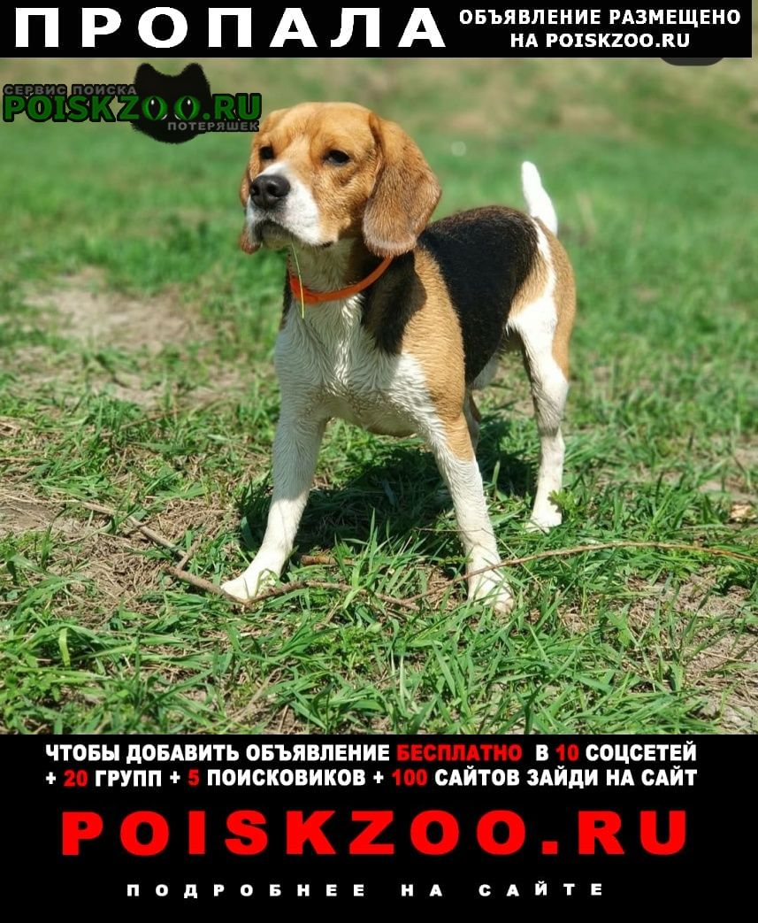 Пропала собака Калуга