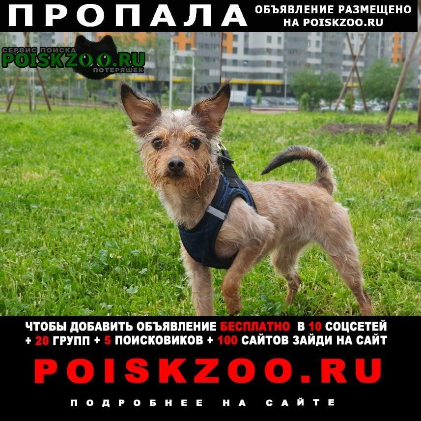 Пропала собака вторая речка, кличка пеппи Владивосток