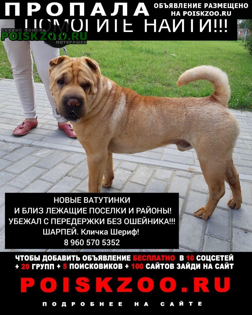 Троицк Пропала собака срочно  рыжий шарпей
