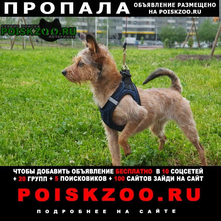 Пропала собака  вторая речка Владивосток