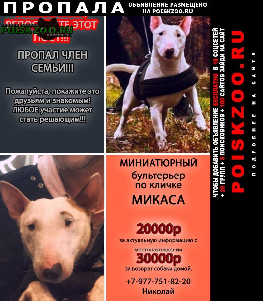 Пропала собака миниатюрный бультерьер по кличке микаса Москва