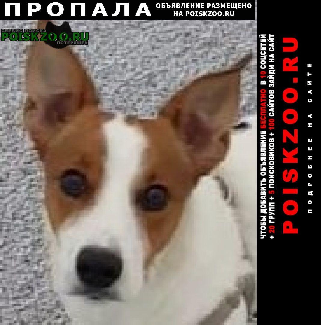 Пропала собака джек рассел Санкт-Петербург
