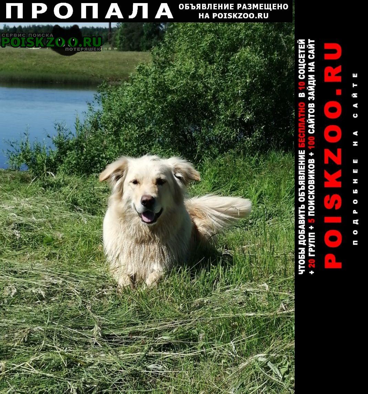Чагода Пропала собака