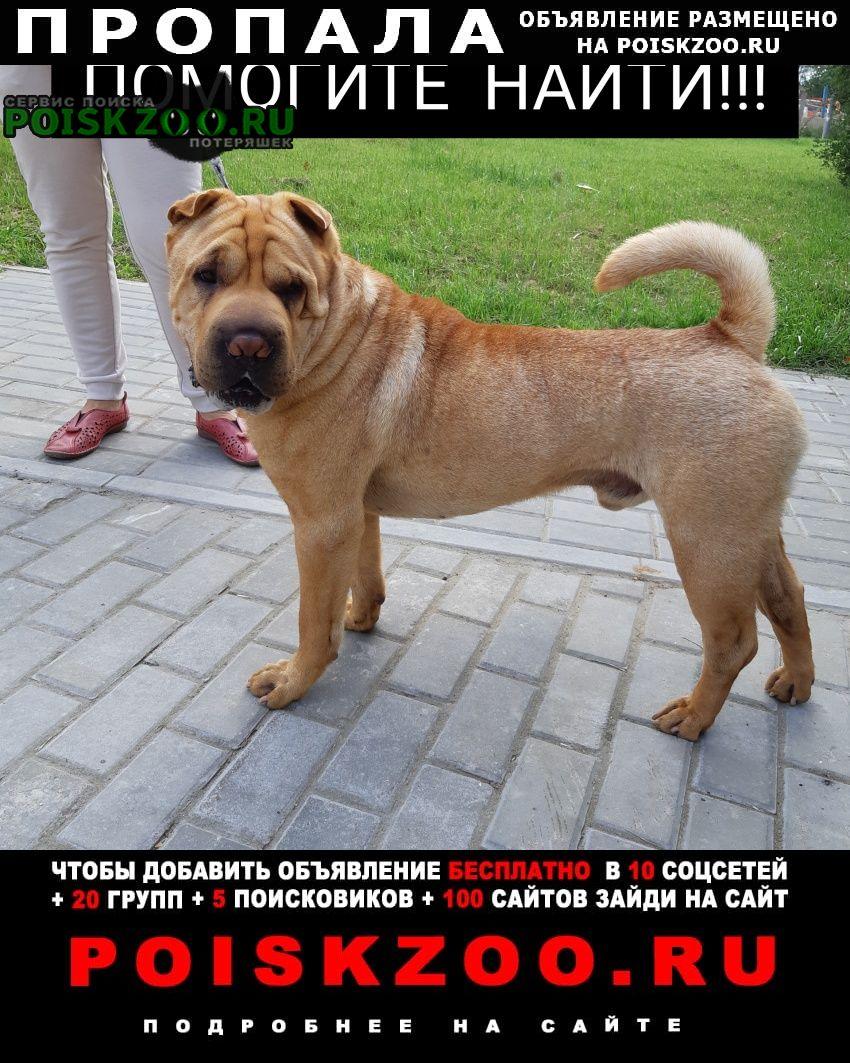 Пропала собака шарпей  Москва