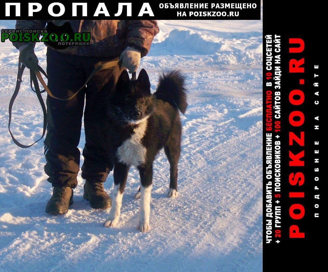 Пропала собака кобель русско-европейской лайки Кимры