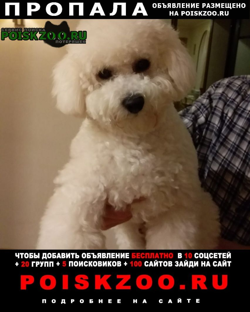 Пропала собака пожалуйста Симферополь