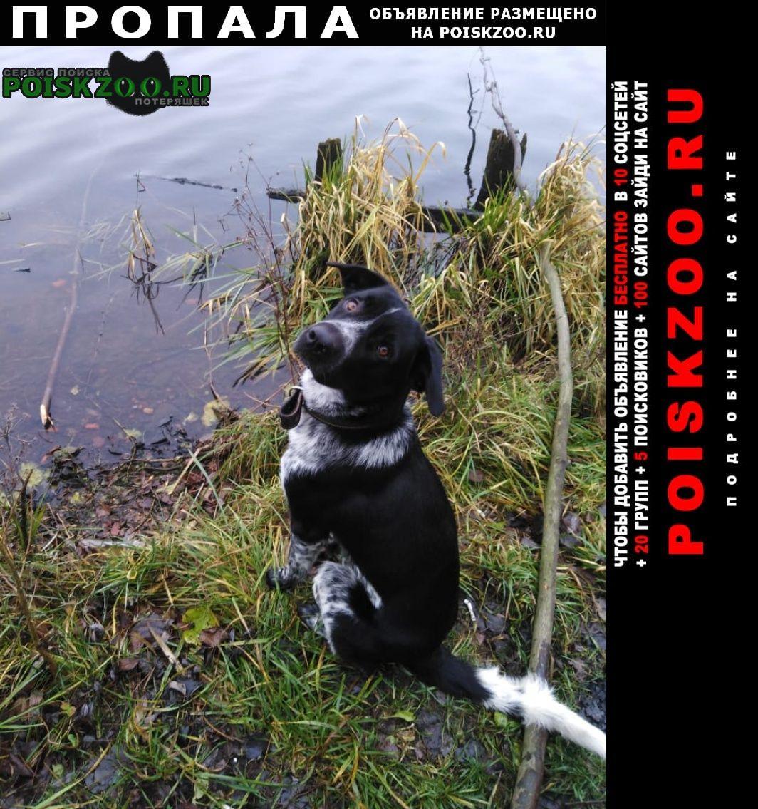 Москва Пропала собака вечером.. в москве