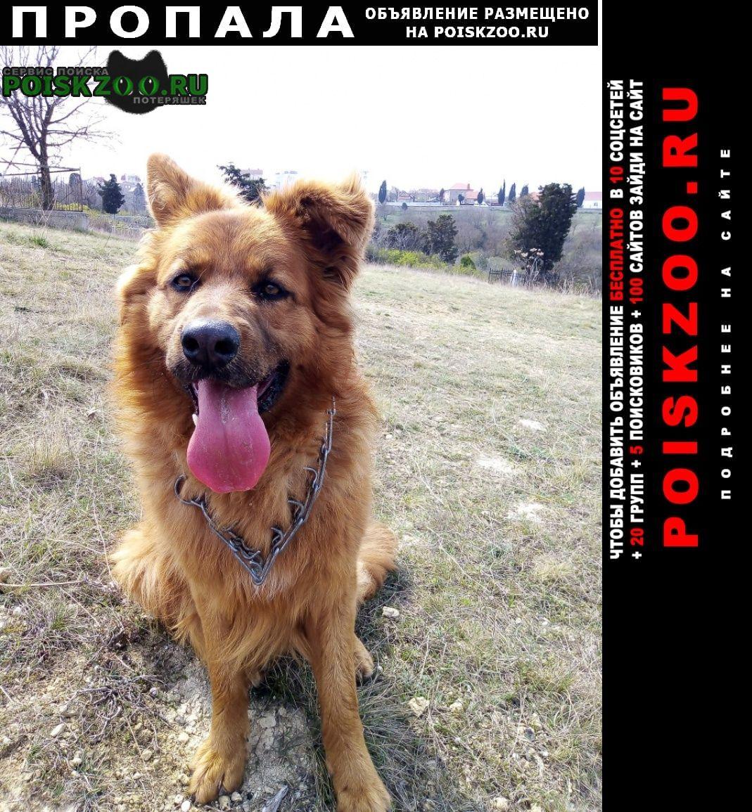 Пропала собака  помогите найти друга  Севастополь