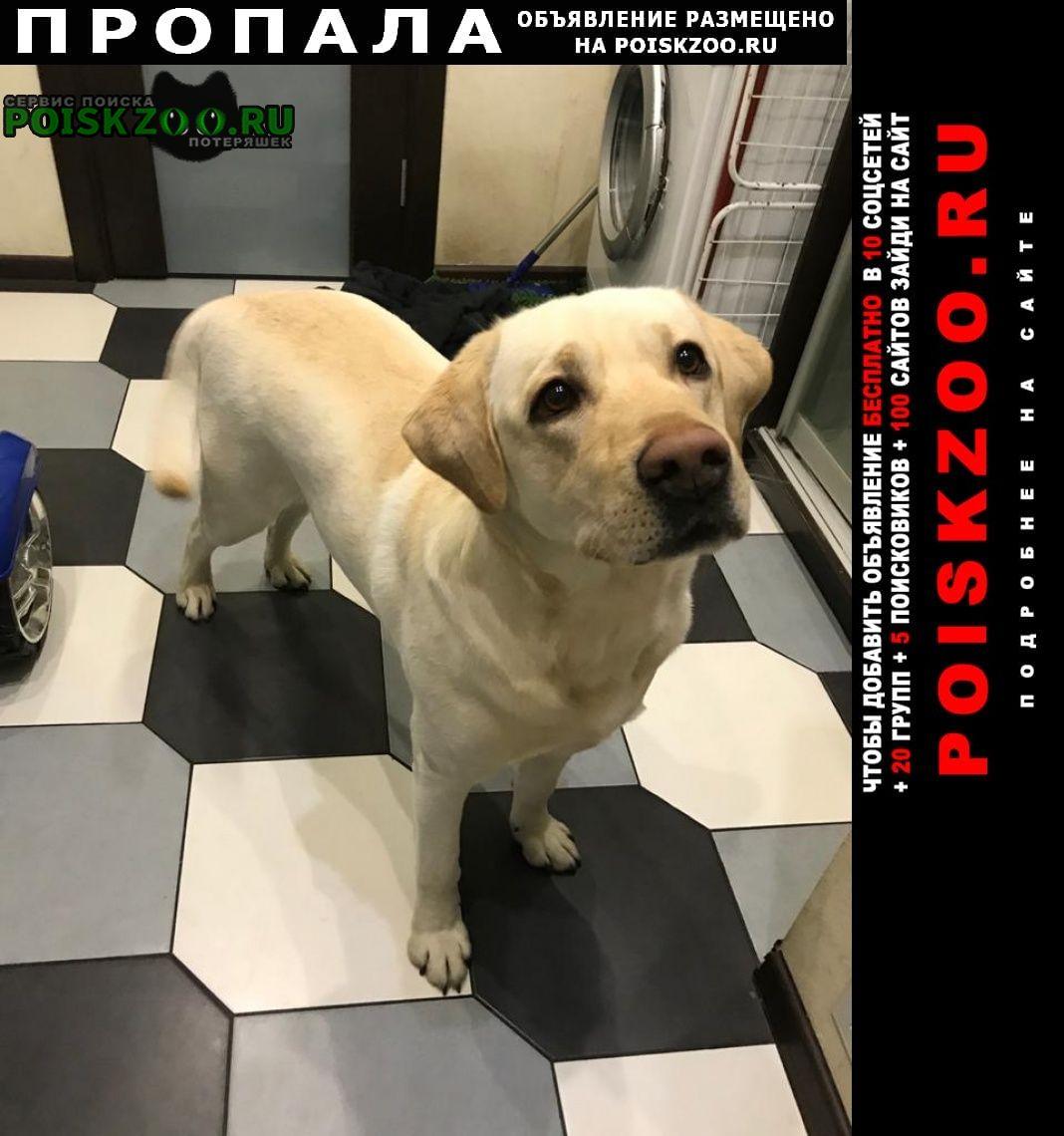 Пропала собака лабрадор Пенза