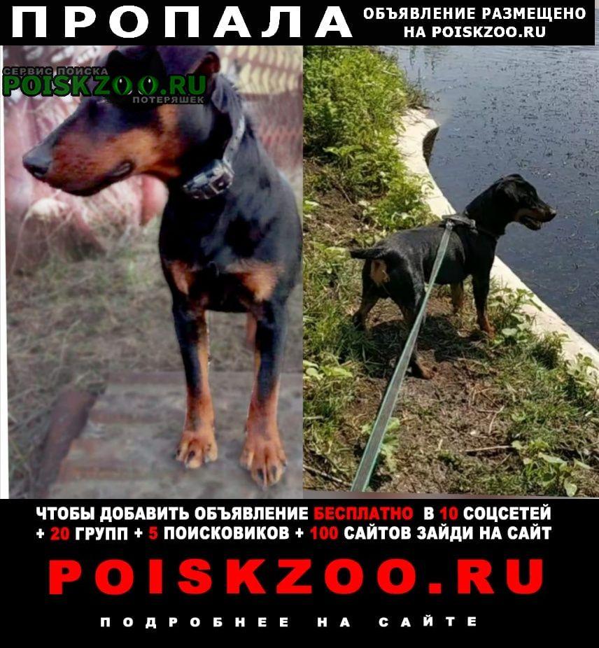 Ростов-на-Дону Пропала собака