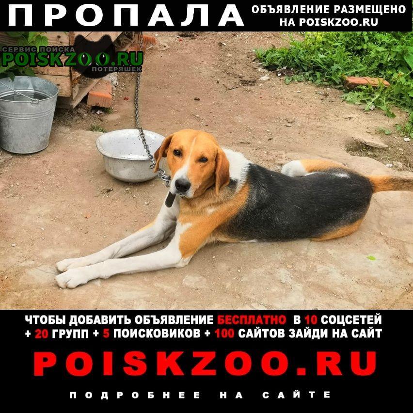 Пропала собака убежали сразу 2 собаки Истра