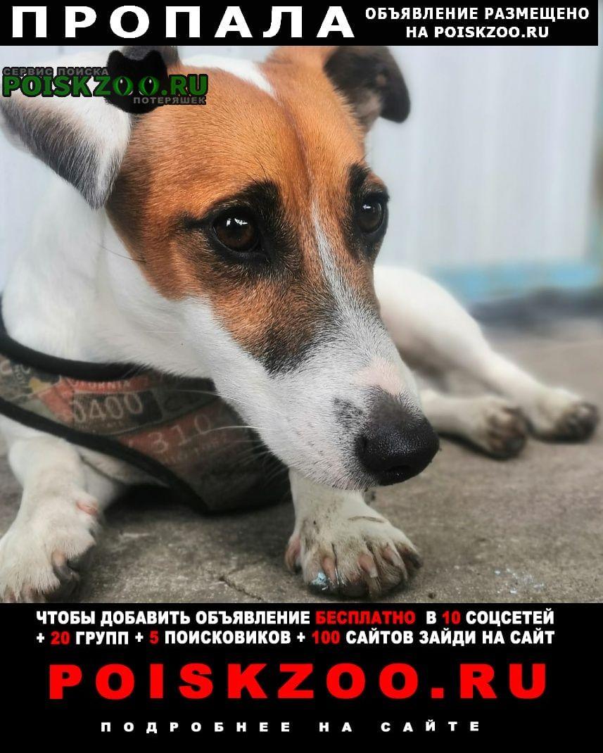 Пропала собака Воронеж