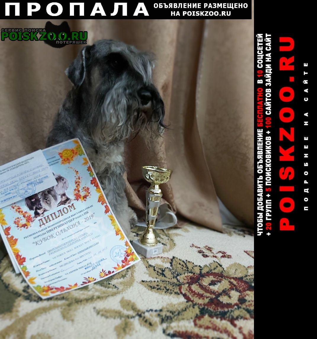 Пропала собака цвергшнауцер Иркутск
