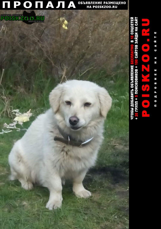 Пропала собака Бишкек