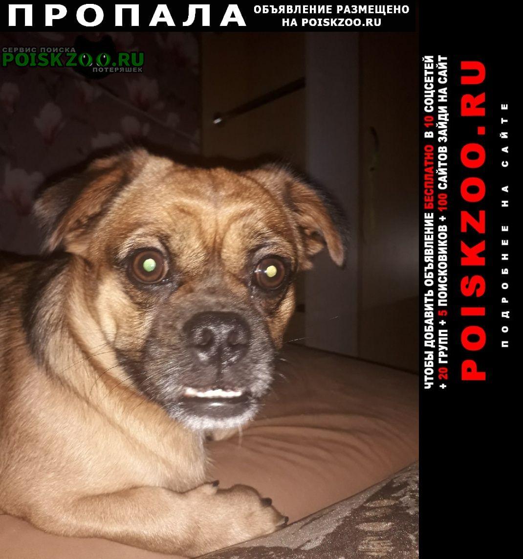 Пропала собака помесь дворняги и мопса Владивосток