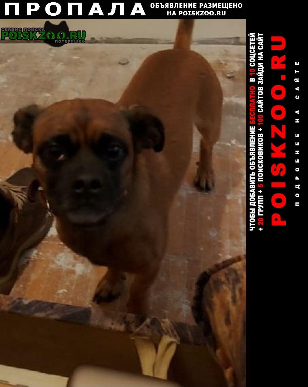 Пропала собака вао, в районе метро щёлковская Москва