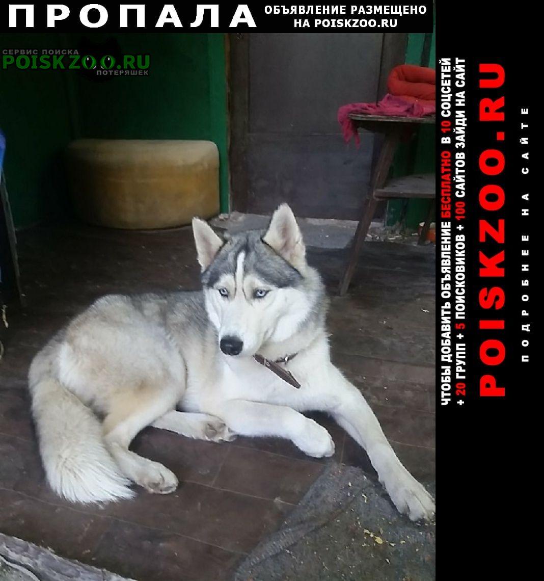 Самара Пропала собака убежал и не вернулся