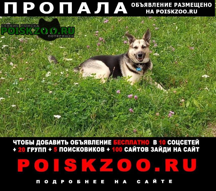 Жуковский Пропала собака